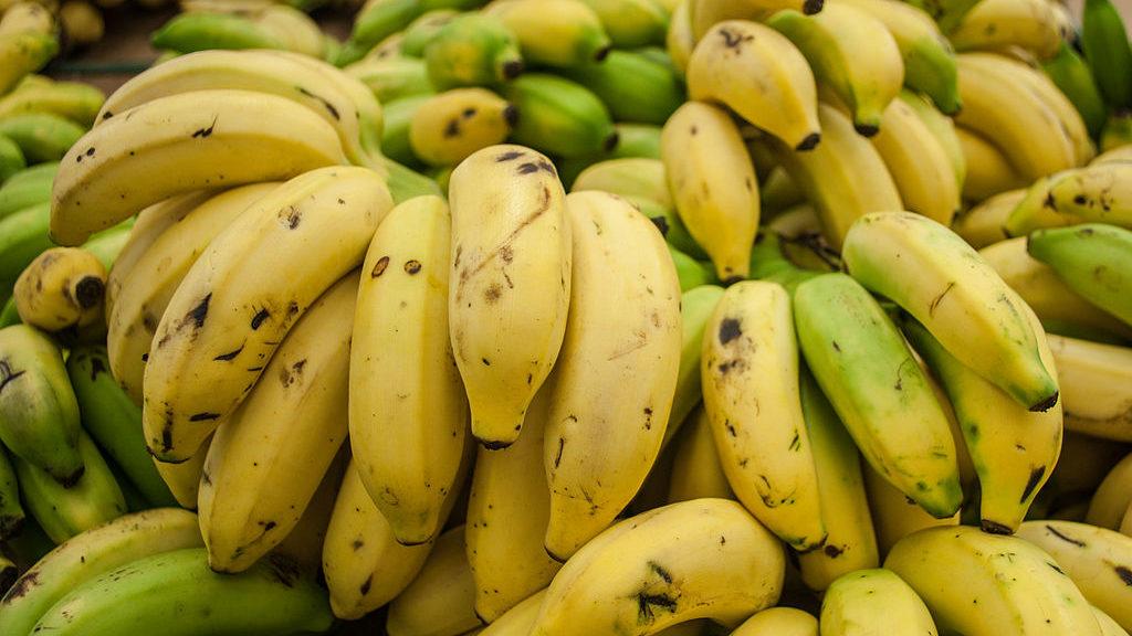 Warum ist die Banane krumm
